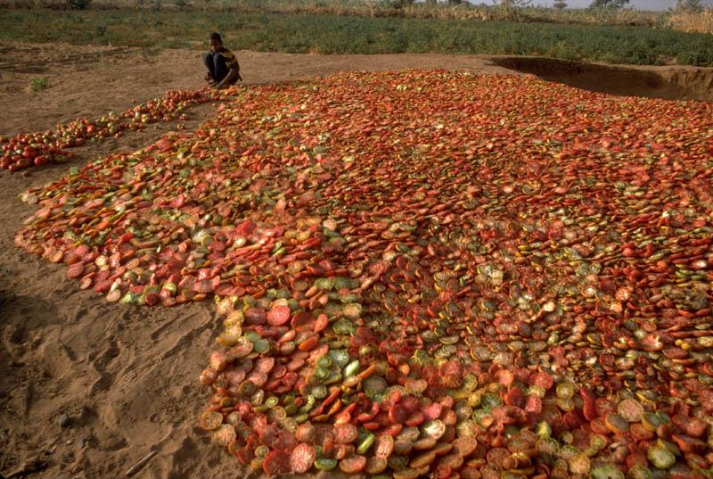 072.Niger_tomates_c_Desjeux